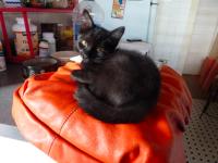 32_lindo-gatito-.png