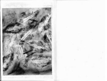 https://estherplanas.com/files/gimgs/th-33_33_screen-shot-2013-03-23-at-190415.png